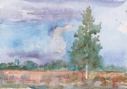 StoreGal/store/Watercolor/_thb_Birch Tree 16x12.jpg