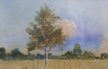 StoreGal/store/Watercolor/_thb_Birch Tree. Evening 16x12.jpg